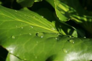 vand-pa-blad