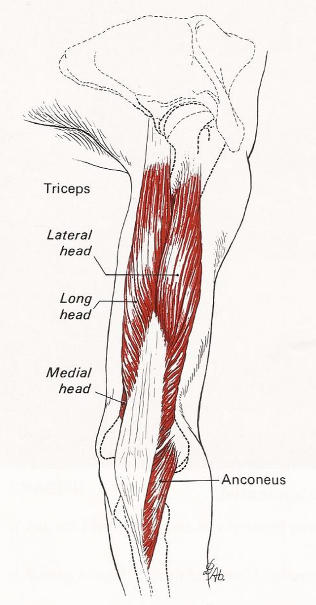 smerter i overarm ved løft